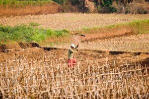 Decline of Agriculture in Nigeria