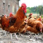 start a poultry farming business in Nigeria